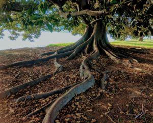 banyan tree health hawaii