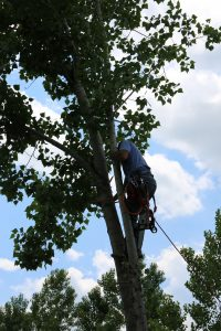 tree trimming arborist company denton texas