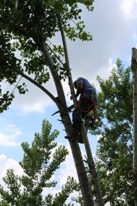 Man cutting tree, arborist in Denton texas