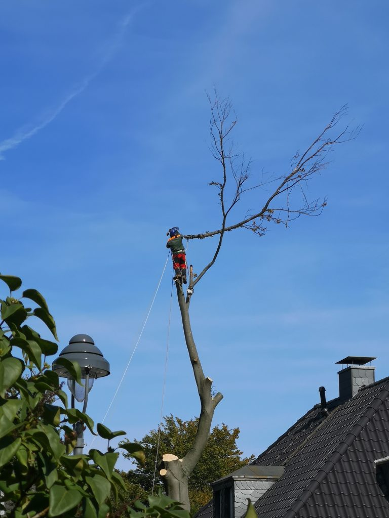 professional tree remover in denton tx